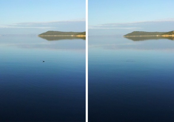 To πουλί της φωτογραφίας λέγεται βουταλίδι, γιατί έχει την ικανότητα να βουτάει και να παραμένει αρκετή ώρα κάτω από το νερό, μέχρι να πιάσει την τροφή του. Οι δύο λήψεις είναι πριν (αριστερά) και μετά τη βουτιά © beautyworkshop.gr