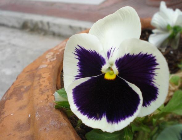 Έξω από την πόρτα του Hammam, ένα σωρό λουλούδια ταίριαξαν γάντι με το Jour που φορούσα βγαίνοντας © beautyworkshop.gr