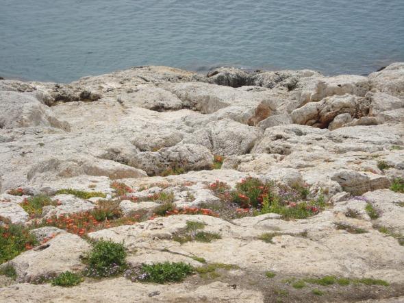 Βόλτα στην Πειραϊκή (μόνο εδώ μπορεί να δει κανείς ανθισμένα βράχια!) © beautyworkshop.gr