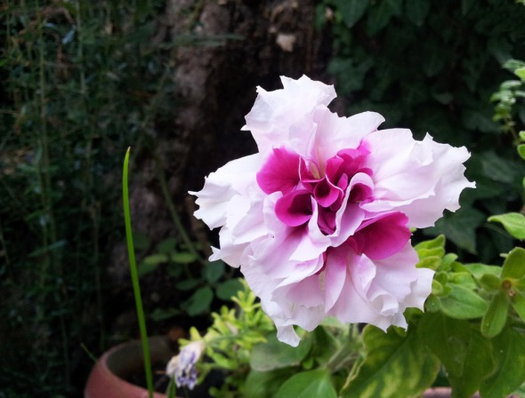 Δεν έχω ιδέα πως λέγεται αυτό το λουλούδι, αλλά είναι υπέροχο © beautyworkshop.gr