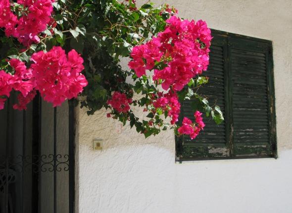 Οι βουκαμβίλιες είναι από τις πιο αγαπημένες μου καλοκαιρινές εικόνες © beautyworkshop.gr