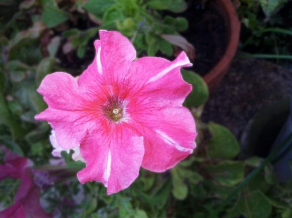 Ένα ακόμα μικρό θαύμα του κήπου. © beautyworkshop.gr