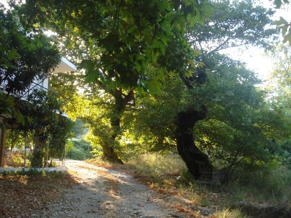 Το τοπίο στο σημείο της νεροτριβής θυμίζει παραμύθι. © beautyworkshop.gr