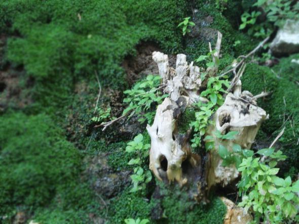Η φύση φτιάχνει τα καλύτερα έργα τέχνης © beautyworkshop.gr