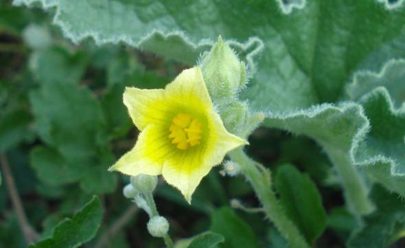 Αφού με ξέρετε, μέσα στη φύση είμαι, να μη βγάλω και κανένα λουλουδάκι; © beautyworkshop.gr