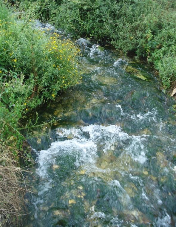 Το ρυάκι στο οποίο καταλήγουν τα νερά της νεροτριβής. Όλη η γύρω περιοχή είναι καταπράσινη: κακά τα ψέματα, όπου υπάρχει νερό, η φύση είναι ευλογημένη © beautyworkshop.gr
