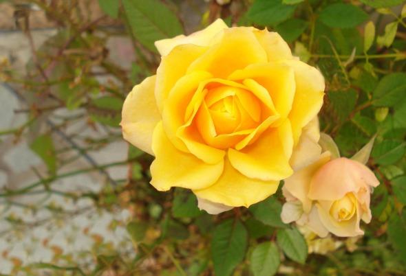 Ένα ποστ χωρίς θέμα, μόνο με φωτογραφίες λουλουδιών που είχα τραβήξει λίγους μήνες πριν στη Βόνιτσα http://wp.me/p2BQA2-ju