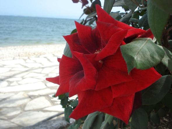 Ένα post γεμάτο λουλούδια... http://wp.me/p2BQA2-Cq
