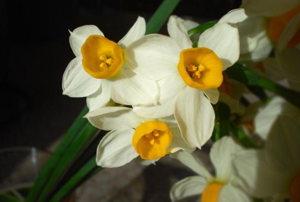 Χειμωνιάτικα άνθη -στην περιοχή τα λένε βουστίνες. Είναι πανέμορφα, μυρίζουν υπέροχα και τα θεωρώ ως το γούρι της νέας χρονιάς. © beautyworkshop.gr