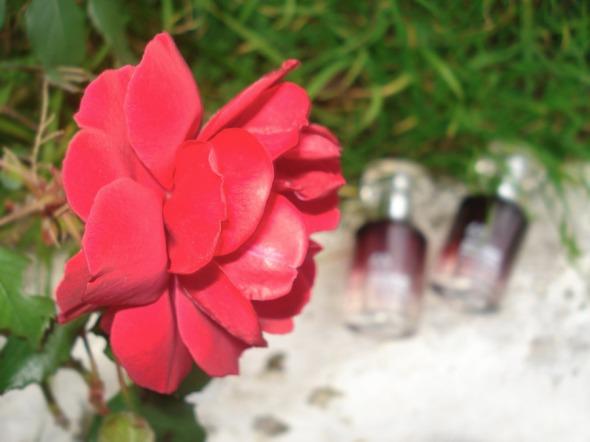Η λήψη έγινε στη Βόνιτσα, αρχές Ιανουαρίου, λόγω αυτού του πολύ όμορφου τριαντάφυλλου που βρήκα να στέκει ολομόναχο, χειμωνιάτικα, σε ένα παρτέρι. © beautyworkshop.gr