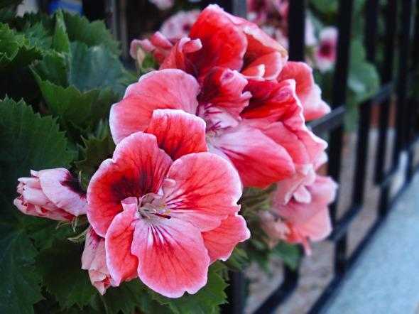 Επηρεασμένη από τον eco αέρα που φυσάει στο αποψινό ποστ, το έχω διανθίσει (στην κυριολεξία), με αρκετές φωτογραφίες λουλουδιών, τις οποίες τράβηξα στη Βόνιτσα το Πάσχα. Όπως πάντα, δεν επιτρέπεται η χρήση τους για εμπορικούς σκοπούς, ωστόσο όλες είναι σε ανάλυση τέτοια ώστε να μπορούν να γίνουν wallpaper στον υπολογιστή. © beautyworkshop